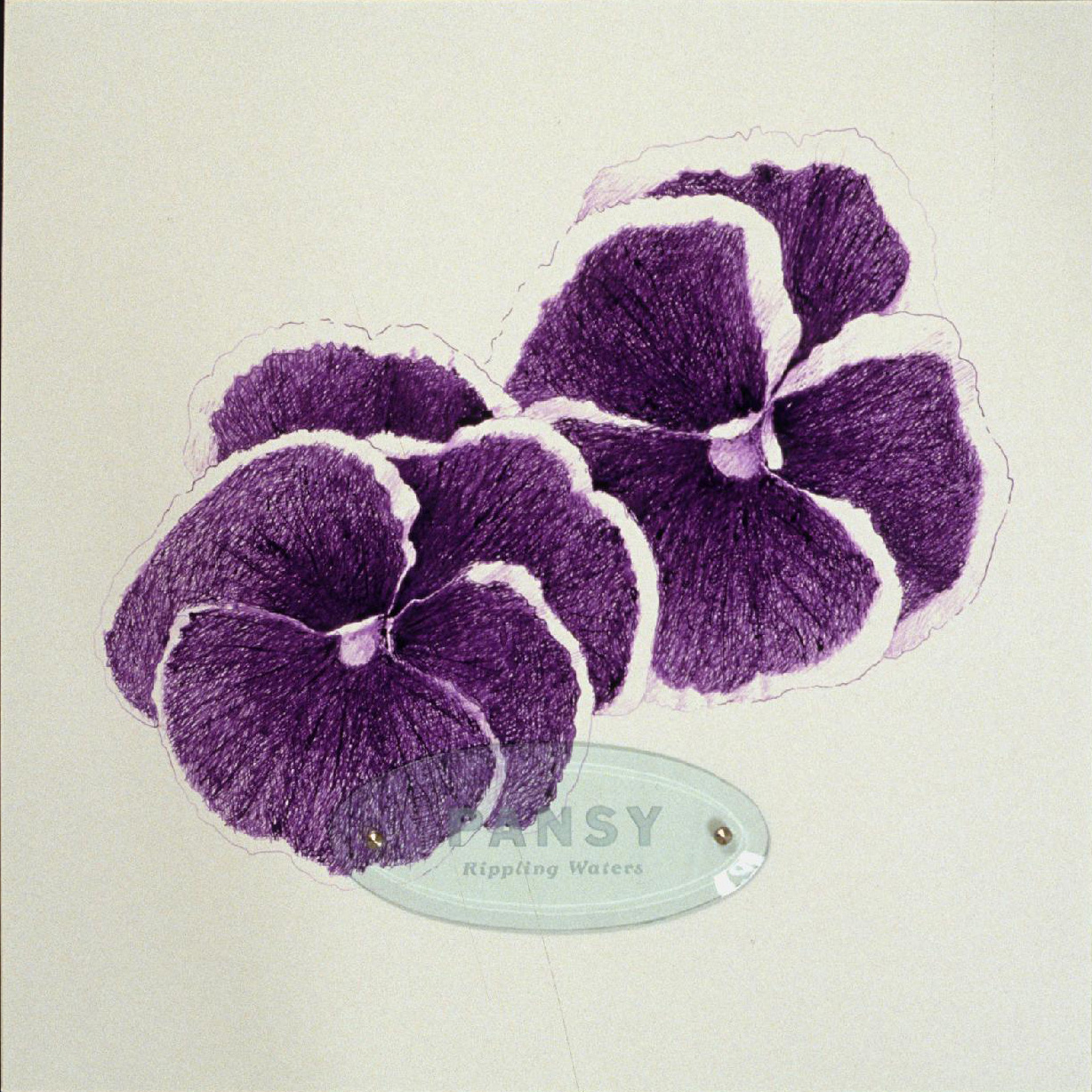 "Pansy ""Rippling Waters,"" 20"" x 20"" (50.8cm x 50.8cm), ink on paper, sandblasted glass, bolts"