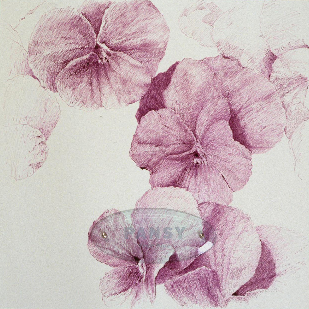 "Pansy ""True Blue,"" 20"" x 20"" (50.8cm x 50.8cm), ink on paper, sandblasted glass, bolts"